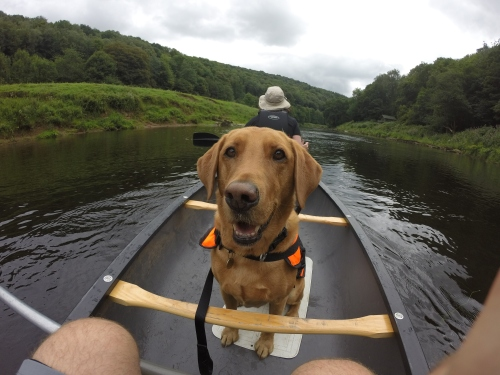 Molly canoeing
